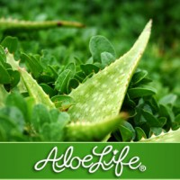 Safety of Drinking Aloe Daily