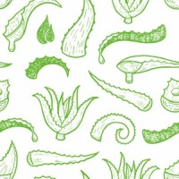 42280526 - seamless background with hand drawn aloe vera leaves.